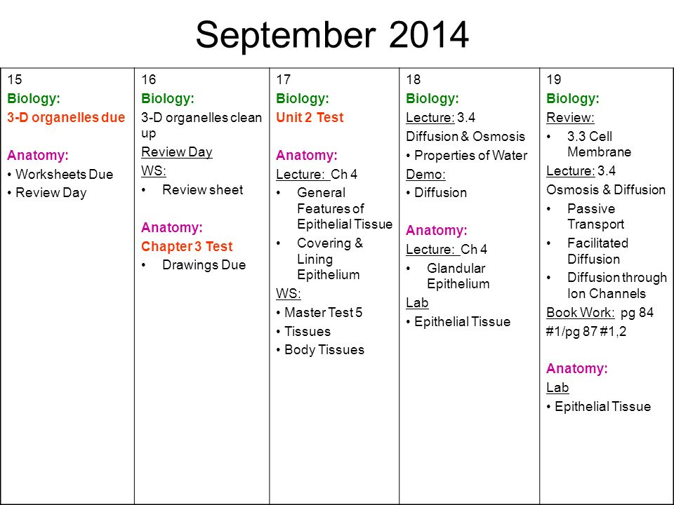 August 2014 MondayTuesdayWednesdayThursdayFriday 1819 First Day of – Epithelial Tissue Worksheet