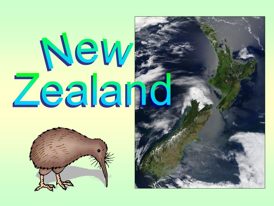 kiwi bird size - Timiz.conceptzmusic.co