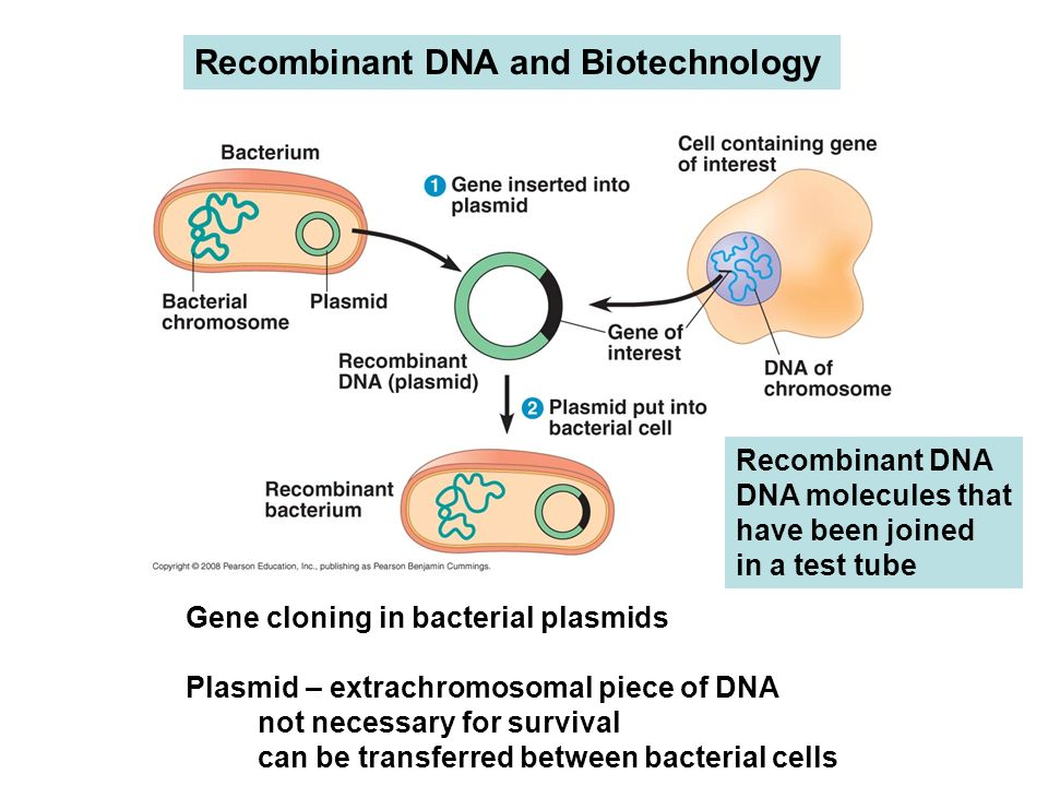 Recombinant DNA and Biotechnology Gene cloning in bacterial plasmids Plasmid – extrachromosomal piece of DNA not necessary for survival can be transferred between bacterial cells Recombinant DNA DNA molecules that have been joined in a test tube