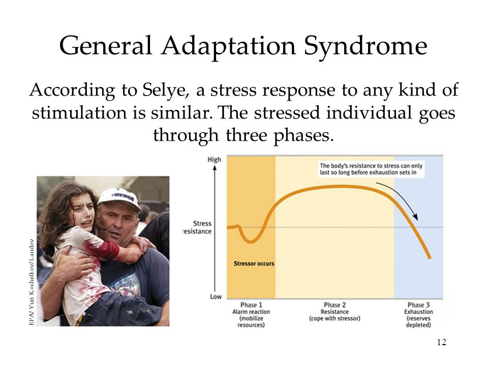 12 General Adaptation Syndrome According to Selye, a stress response to any kind of stimulation is similar.
