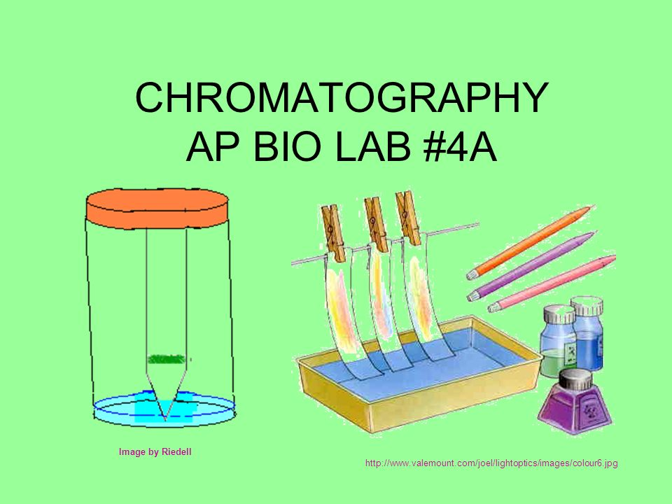 photosynthesis chromatography lab Chromatography of photosynthetic pigments in it is necessary that some information on the experiment on chromatography of as far as photosynthesis.