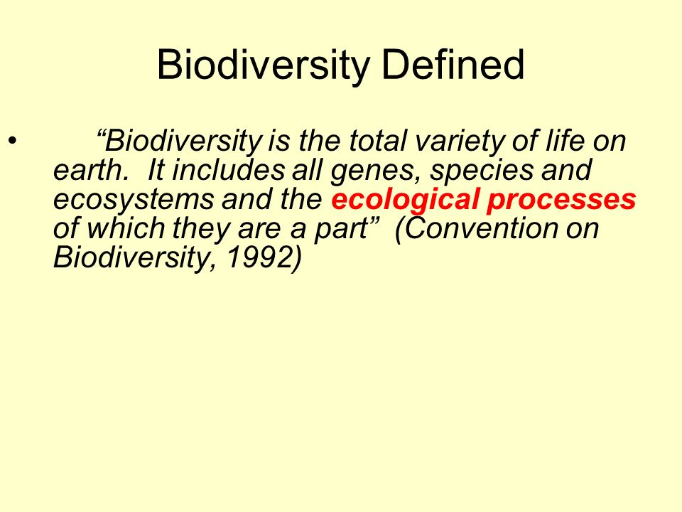 Why is biodiversity important to life on earth and what makes it increase?