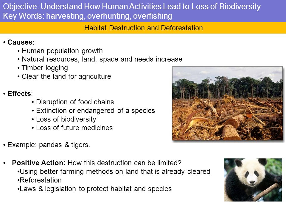 biodiversity loss essay Biodiversity loss species loss changes the most important processes of the ecosystem,productivity and sustainabilitybiodiversity loss quickens this alteration of the ecosystem it is researched whether species loss and the change of ecosystem or global enviromental changes have more effect on vital processes.