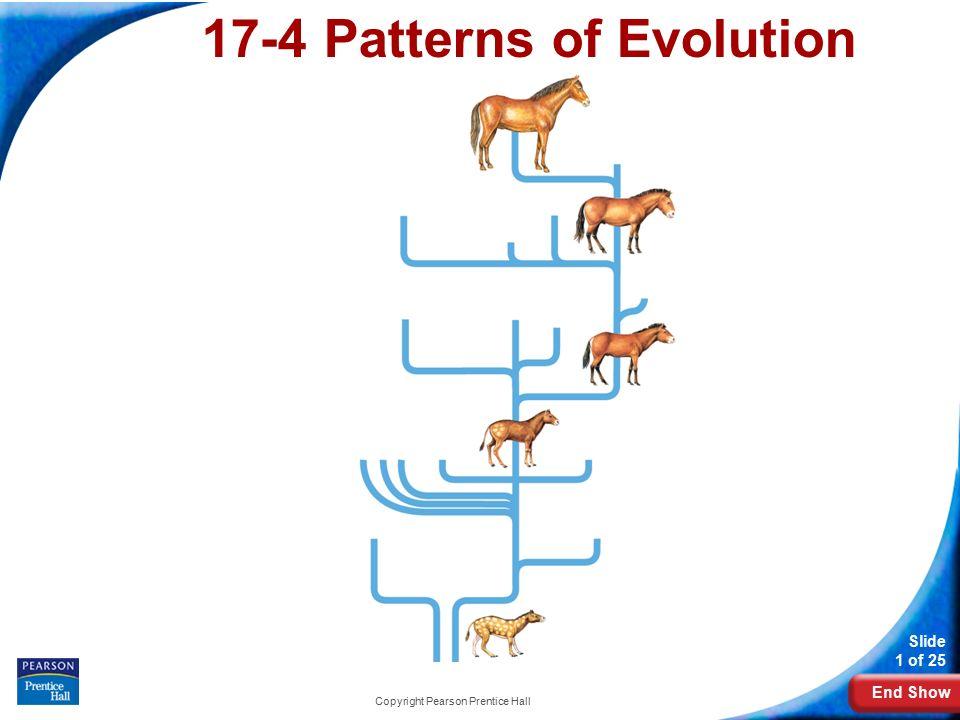 Worksheet Patterns Mechanisms of Evolution Key - Patterns ...