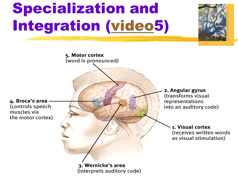 Specialization and Integration (video5)video