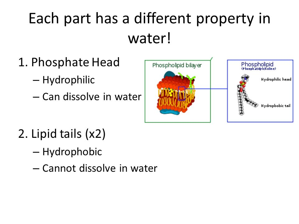 Each part has a different property in water. 1.