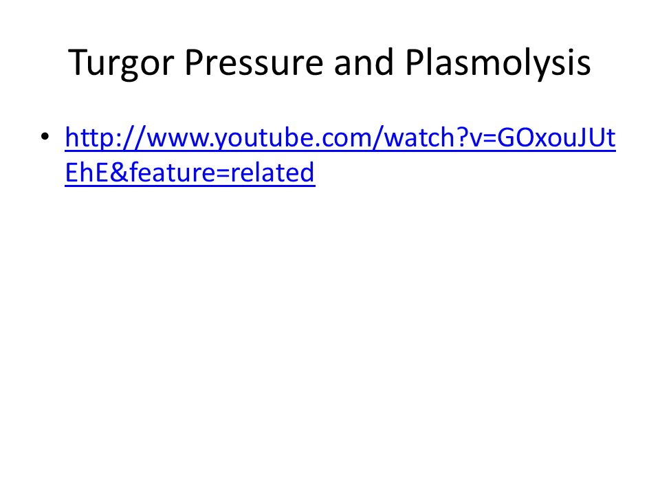 Turgor Pressure and Plasmolysis   v=GOxouJUt EhE&feature=related   v=GOxouJUt EhE&feature=related