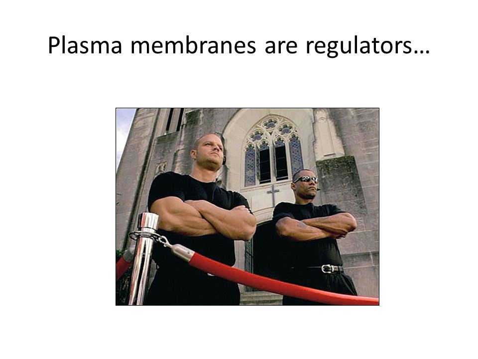 Plasma membranes are regulators…