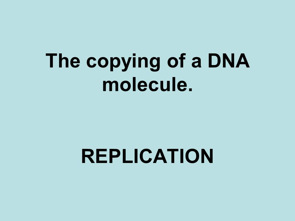 The copying of a DNA molecule. REPLICATION