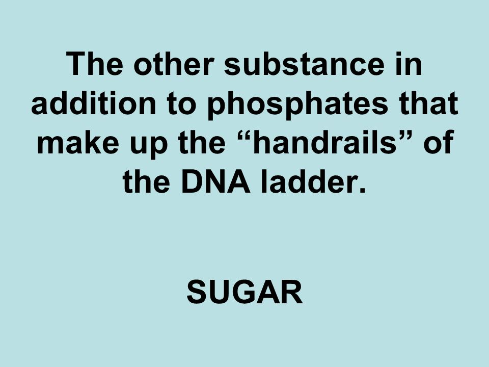The other substance in addition to phosphates that make up the handrails of the DNA ladder. SUGAR
