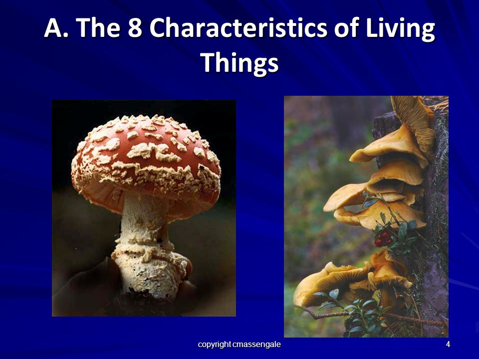 4 A. The 8 Characteristics of Living Things copyright cmassengale