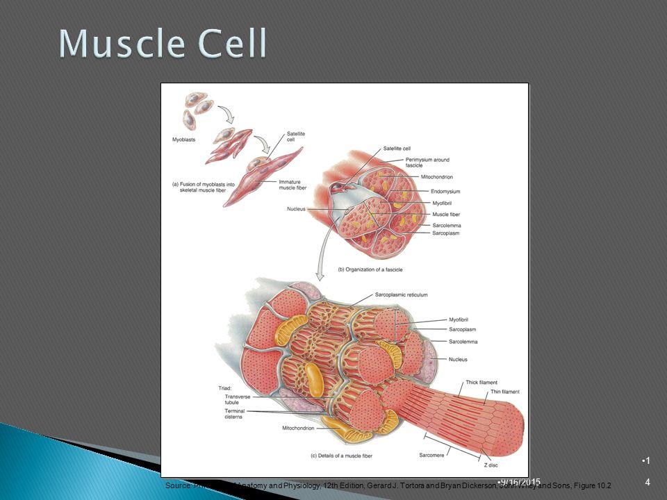 Famoso Principles Of Human Anatomy Tortora 12th Edition Regalo ...
