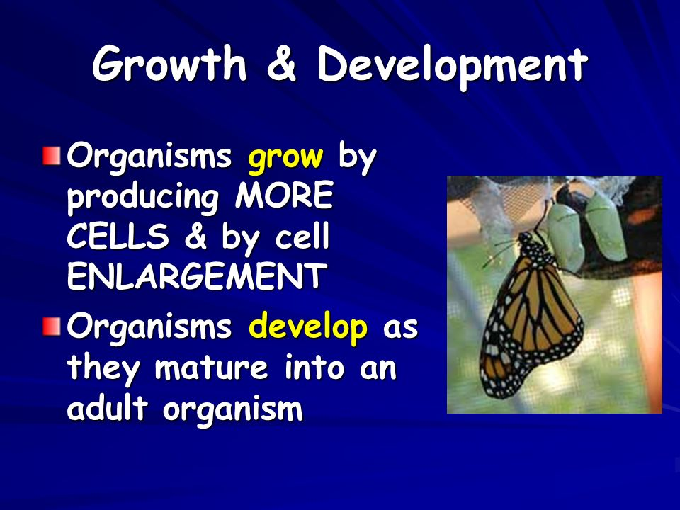 Growth & Development Organisms grow by producing MORE CELLS & by cell ENLARGEMENT Organisms develop as they mature into an adult organism