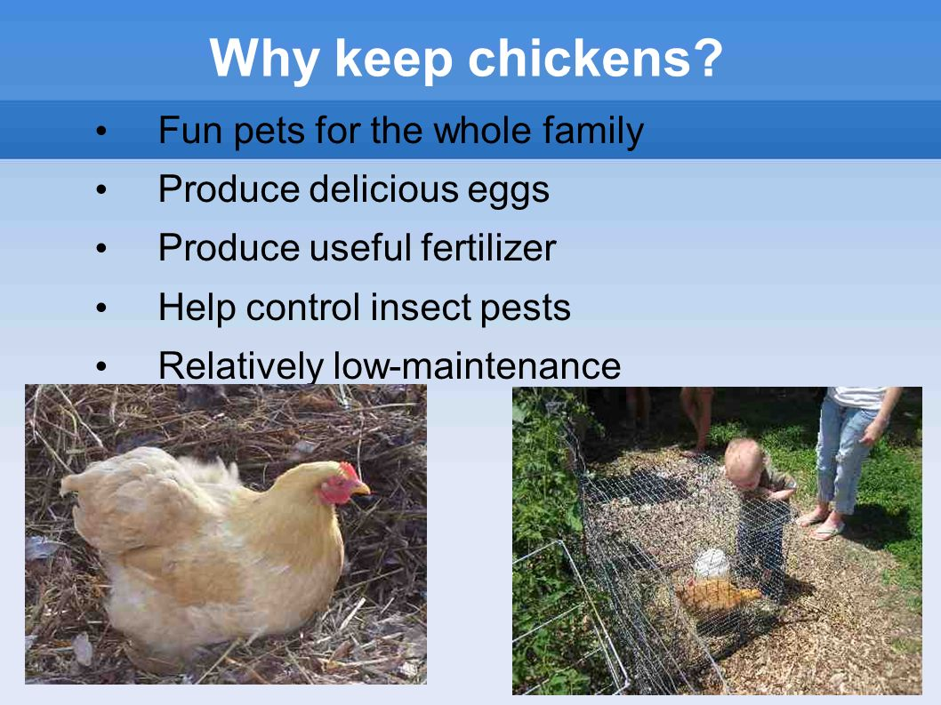 backyard chickens or front yard presented by leslie pillen
