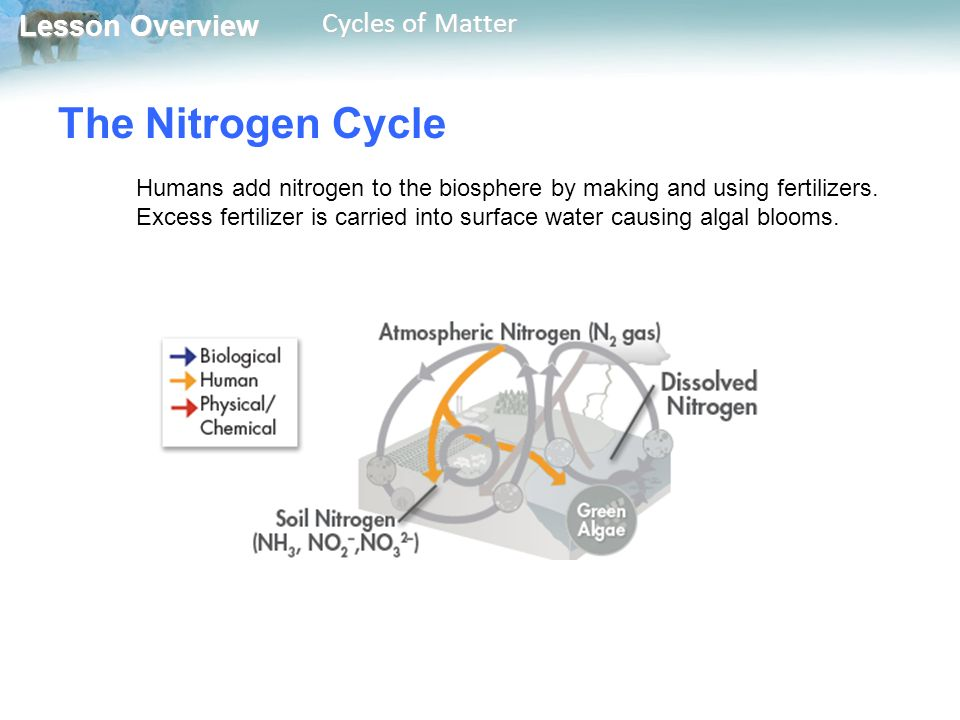 Lesson Overview Lesson Overview Cycles of Matter The Nitrogen Cycle Humans add nitrogen to the biosphere by making and using fertilizers.