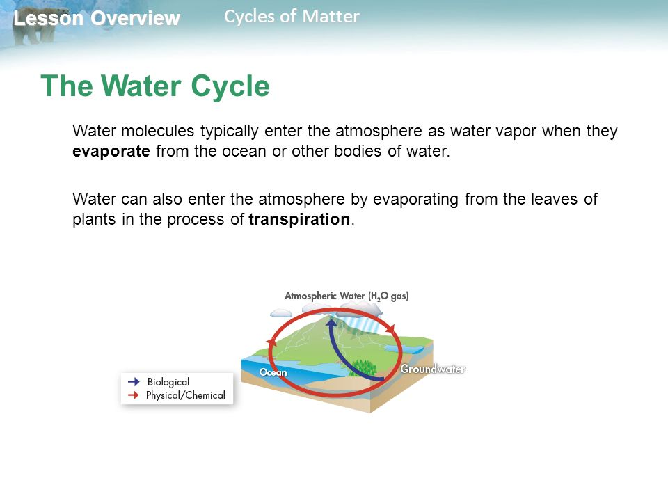 Lesson Overview Lesson Overview Cycles of Matter The Water Cycle Water molecules typically enter the atmosphere as water vapor when they evaporate from the ocean or other bodies of water.