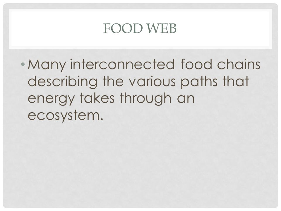 FOOD WEB Many interconnected food chains describing the various paths that energy takes through an ecosystem.
