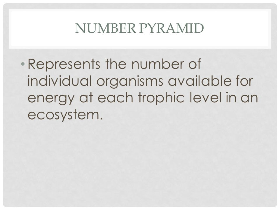 NUMBER PYRAMID Represents the number of individual organisms available for energy at each trophic level in an ecosystem.