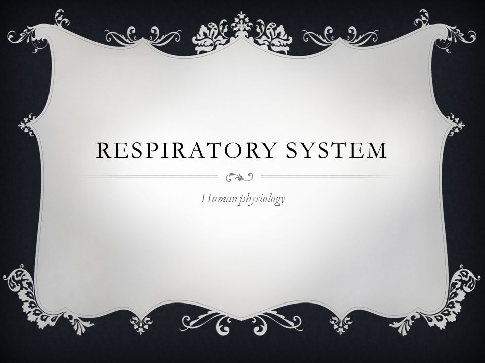 RESPIRATORY SYSTEM Human physiology