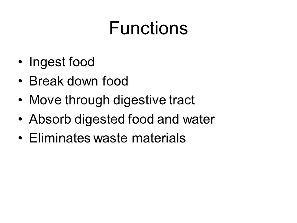 Functions Ingest food Break down food Move through digestive tract Absorb digested food and water Eliminates waste materials