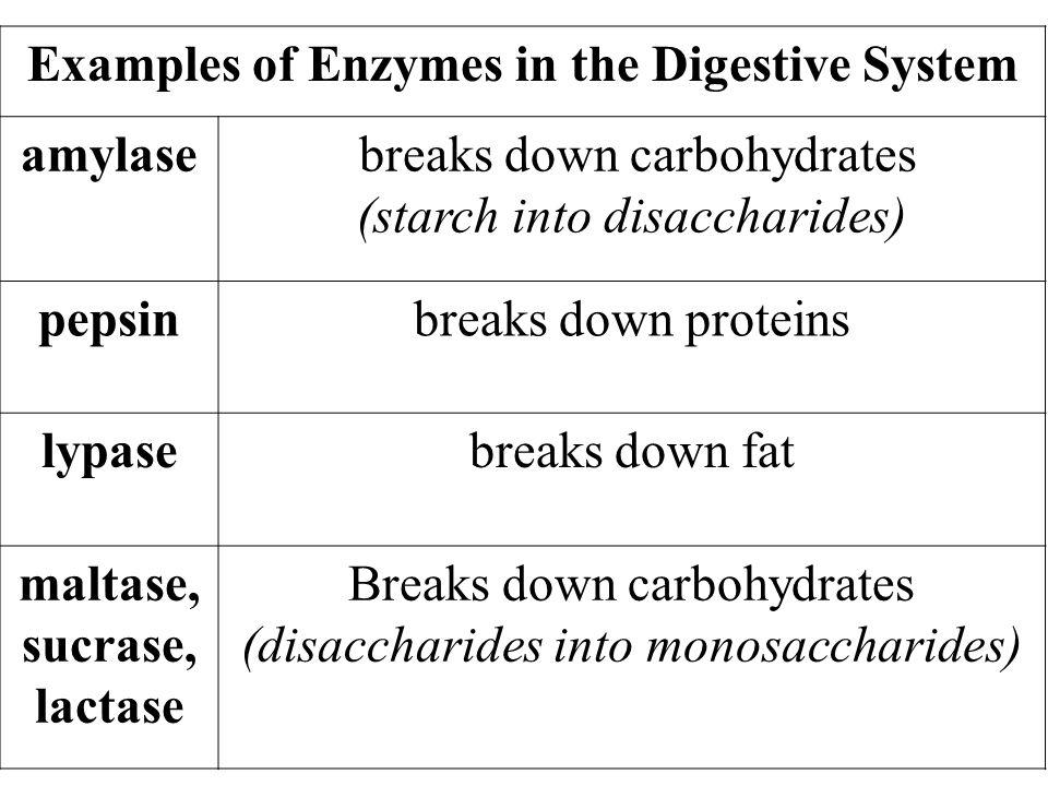 Best Diet Plan For Type Ii Diabetes