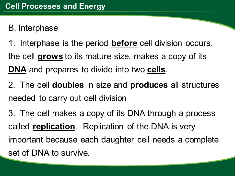 math worksheet : cell processes and energy do now take the worksheet from the  : Section 10 2 Cell Division Worksheet Answers