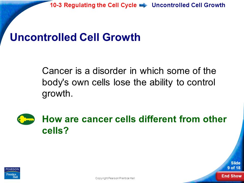 End Show 10-3 Regulating the Cell Cycle Slide 9 of 18 Copyright Pearson Prentice Hall Uncontrolled Cell Growth Cancer is a disorder in which some of the body s own cells lose the ability to control growth.