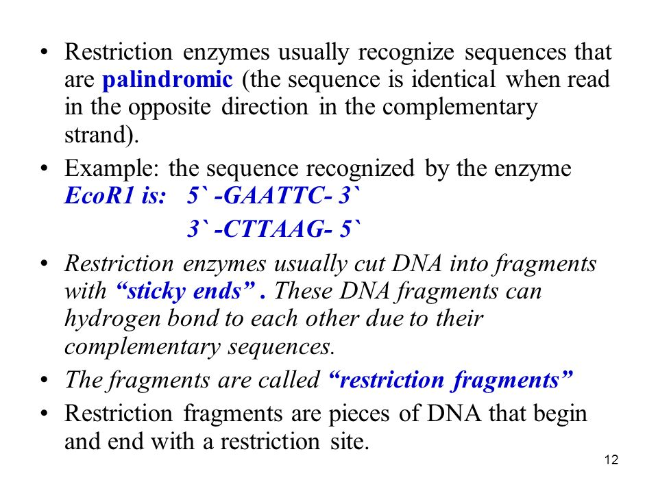 12 Restriction enzymes usually recognize sequences that are palindromic (the sequence is identical when read in the opposite direction in the complementary strand).