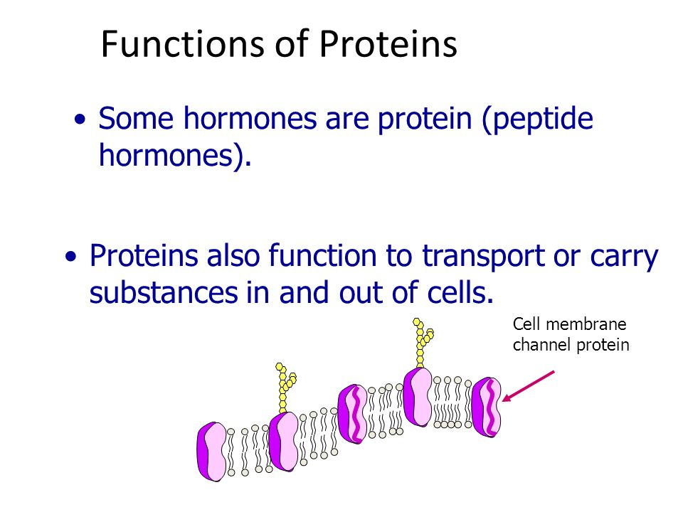 Functions of Proteins Some hormones are protein (peptide hormones).