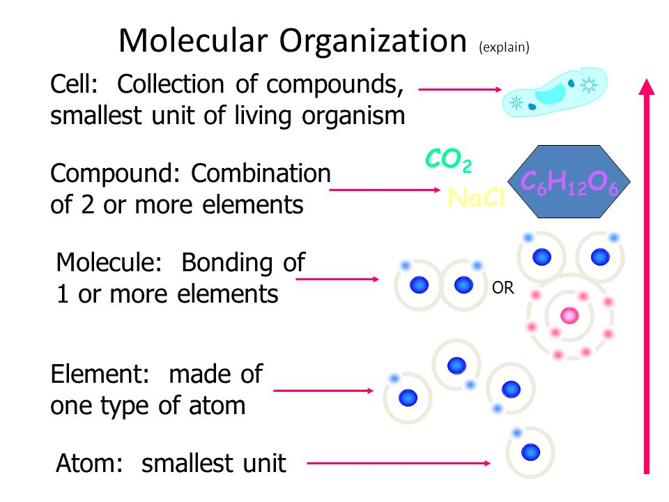 Molecular Organization (explain) Atom: smallest unit Element: made of one type of atom CO 2 NaCl C 6 H 12 O 6 Molecule: Bonding of 1 or more elements Compound: Combination of 2 or more elements Cell: Collection of compounds, smallest unit of living organism OR