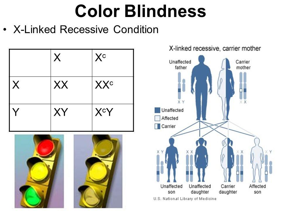 Color blindness sex linked
