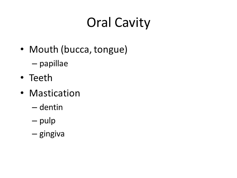 Oral Cavity Mouth (bucca, tongue) – papillae Teeth Mastication – dentin – pulp – gingiva