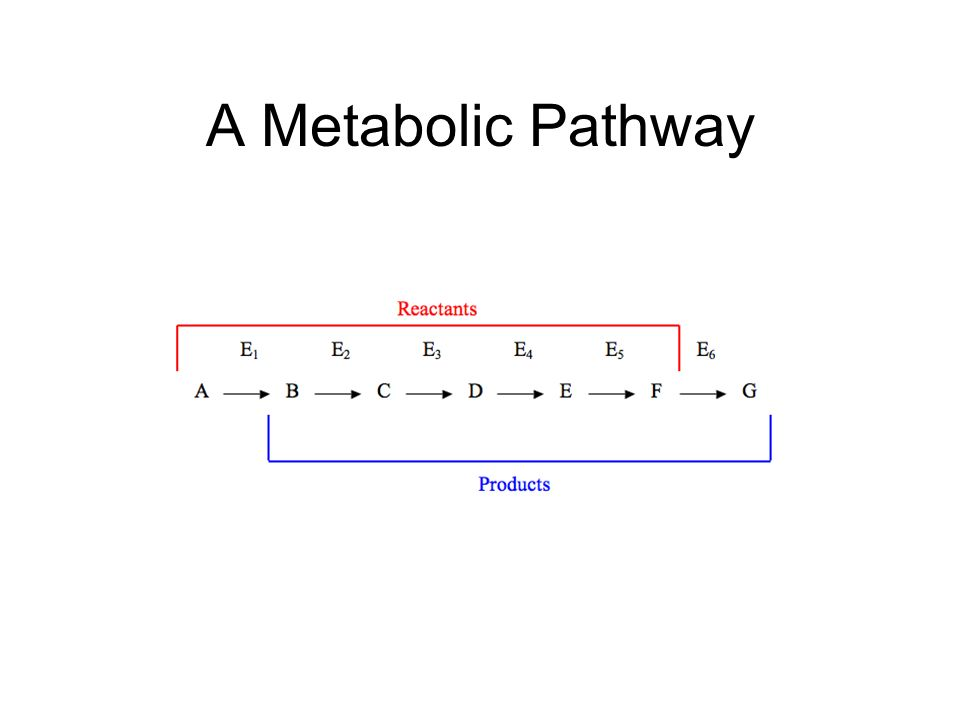 A Metabolic Pathway