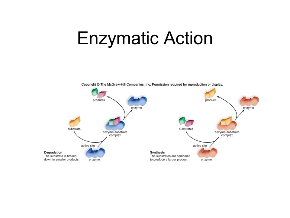 Enzymatic Action