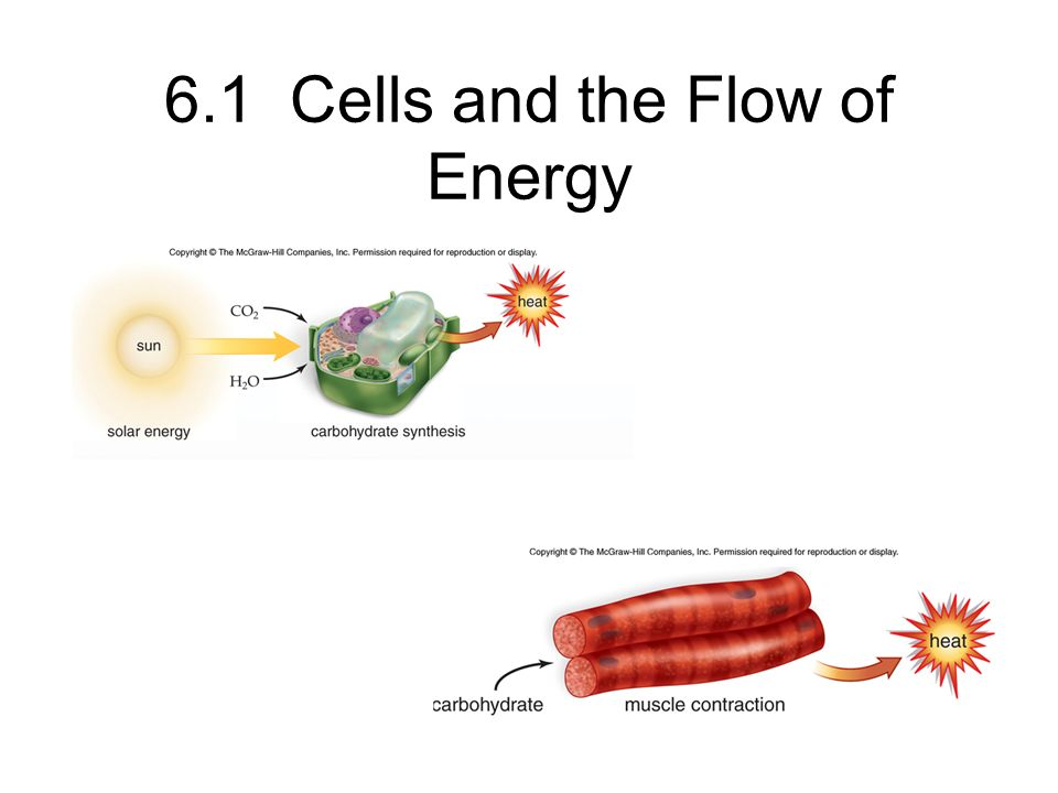 6.1 Cells and the Flow of Energy