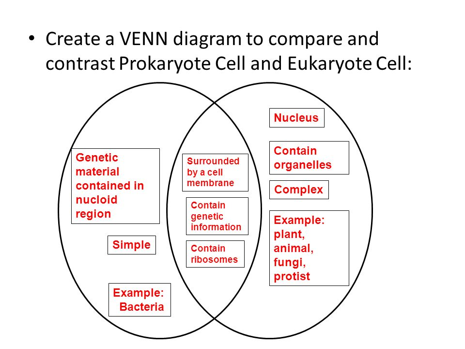 Venn diagram light dependent and light independent reactions combo with biology cell test and 1 other questions and study rh quizlet com light independent reactions of photosynthesis steps of photosynthesis diagram ccuart Images