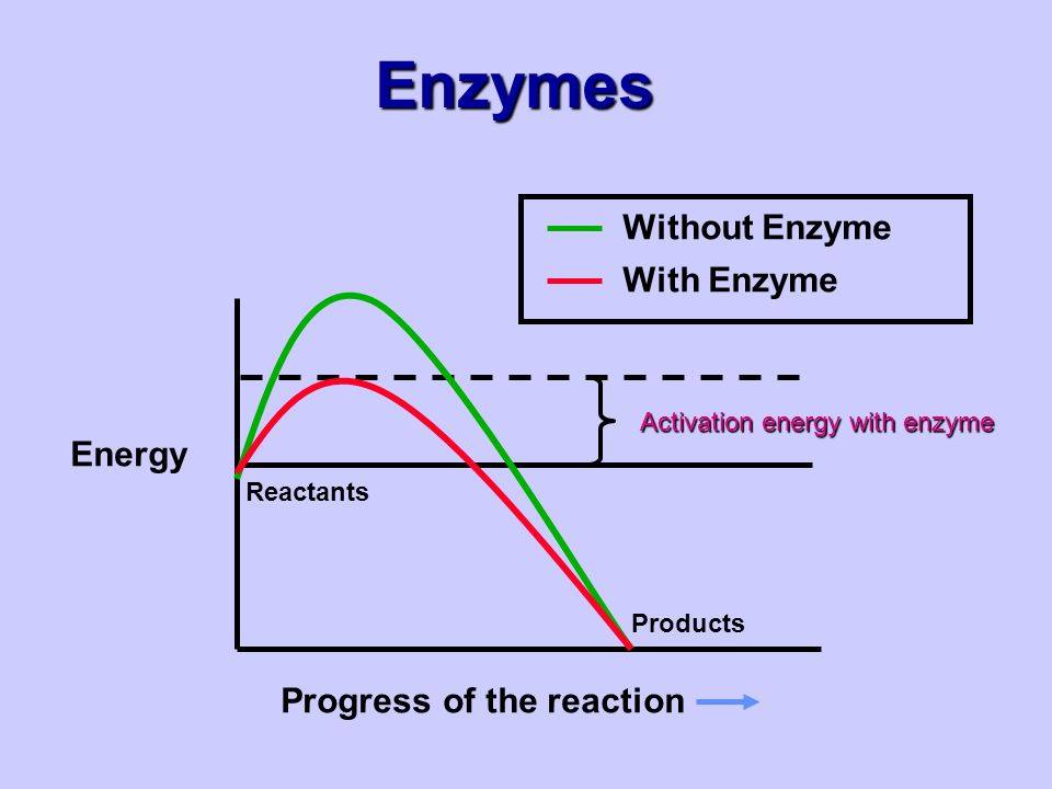 Enzymes Energy Progress of the reaction Reactants Products Activation energy with enzyme Without Enzyme With Enzyme