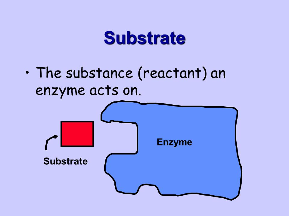 Substrate The substance (reactant) an enzyme acts on. Enzyme Substrate