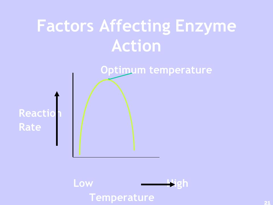 20 Temperature & pH High temperatures are the most dangerous reactions & denature enzymes (Most like normal Body temperatures) Most enzymes like near neutral pH (6 to 8) Denatured (unfolded) by ionic salts and metal ions