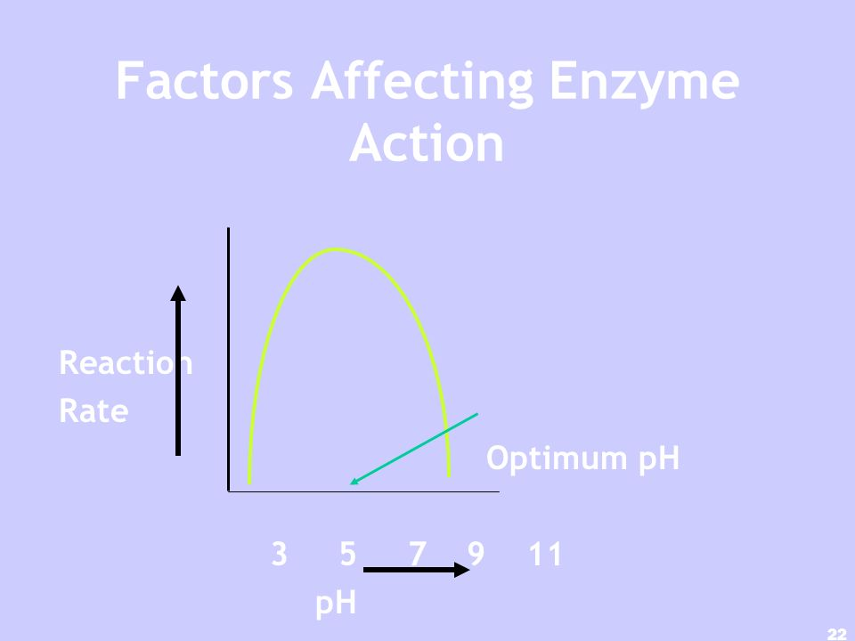 21 Factors Affecting Enzyme Action Optimum temperature Reaction Rate Low High Temperature