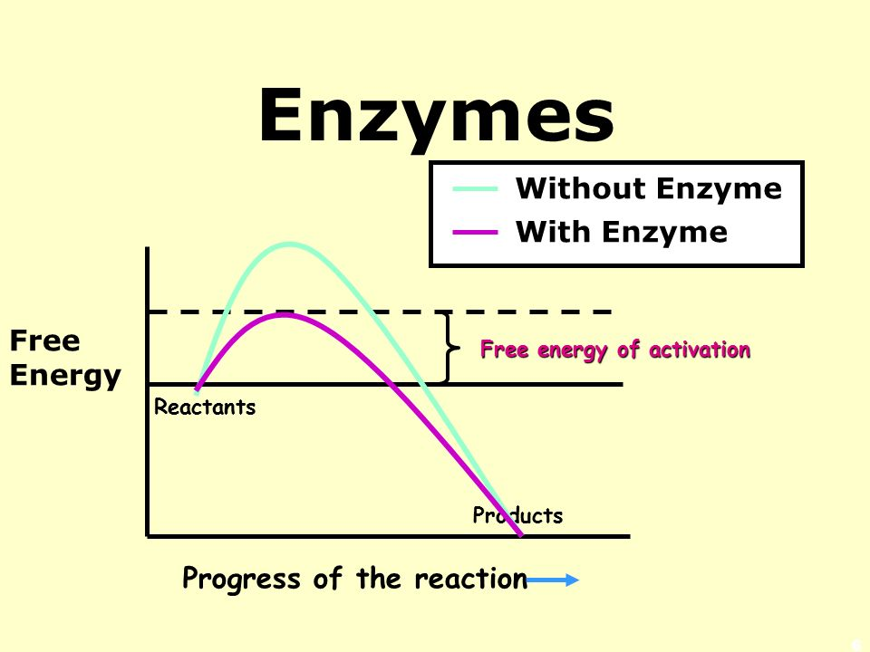 Enzymes Lower a Reaction's Activation Energy Activation Energy = energy needed to start a chemical reaction