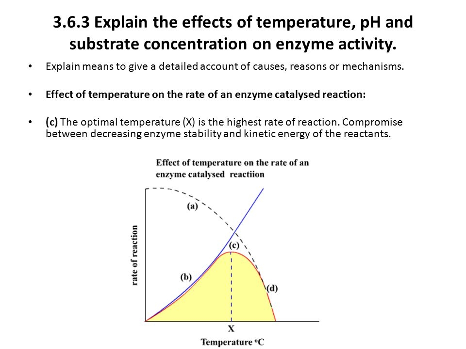 3.6.3 Explain the effects of temperature, pH and substrate concentration on enzyme activity.