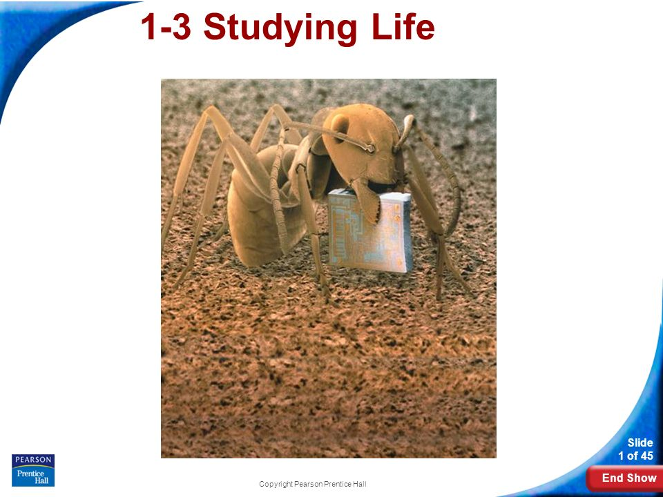 End Show Slide 1 of 45 Copyright Pearson Prentice Hall 1-3 Studying Life
