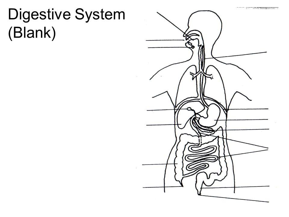 Digestion digestive system blank digestive system labeled ppt 2 digestive system blank ccuart Choice Image