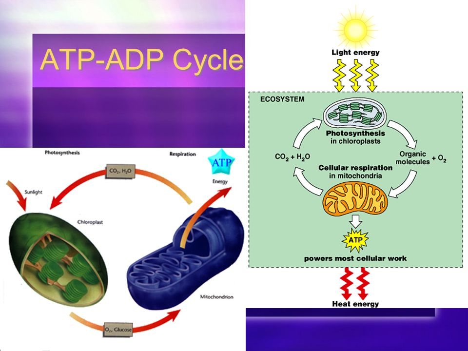 Enzymes & The Need for Energy Section 1: Enzymes. - ppt download