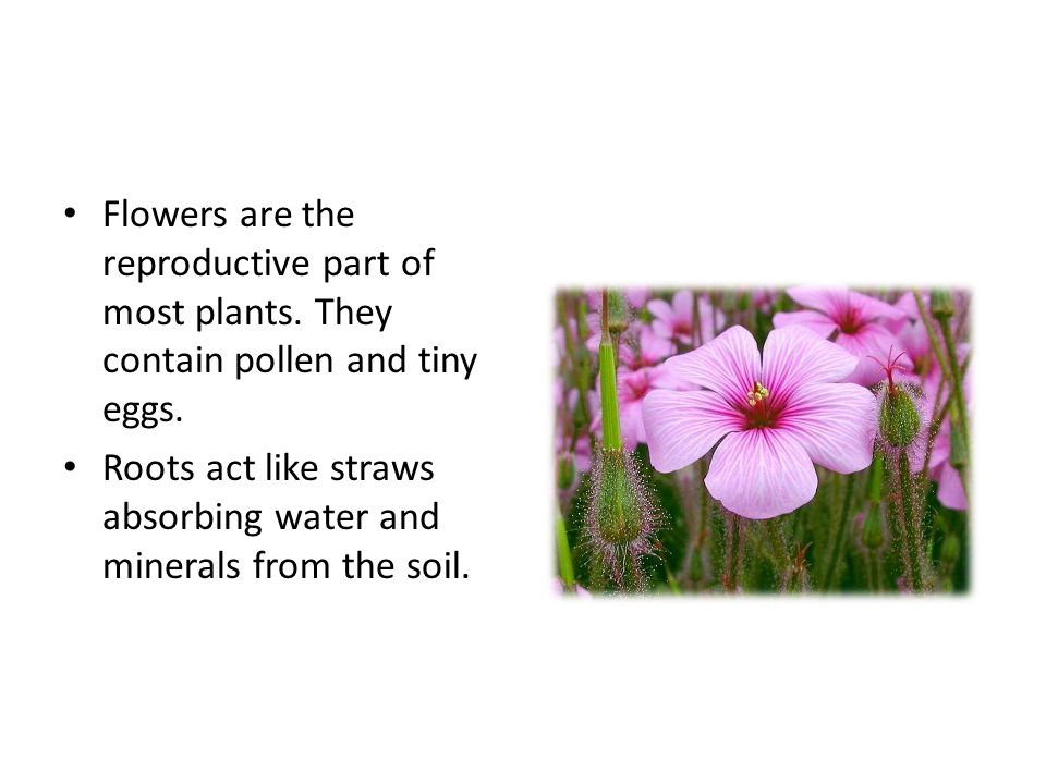 Flowers are the reproductive part of most plants. They contain pollen and tiny eggs.