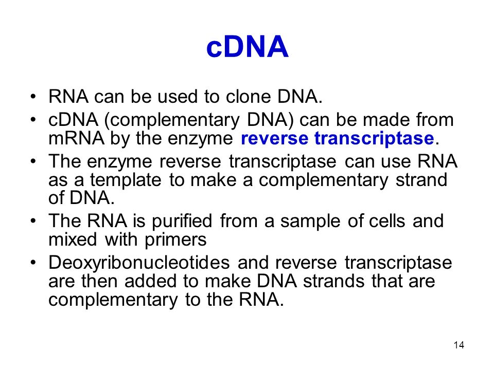 14 cDNA RNA can be used to clone DNA.