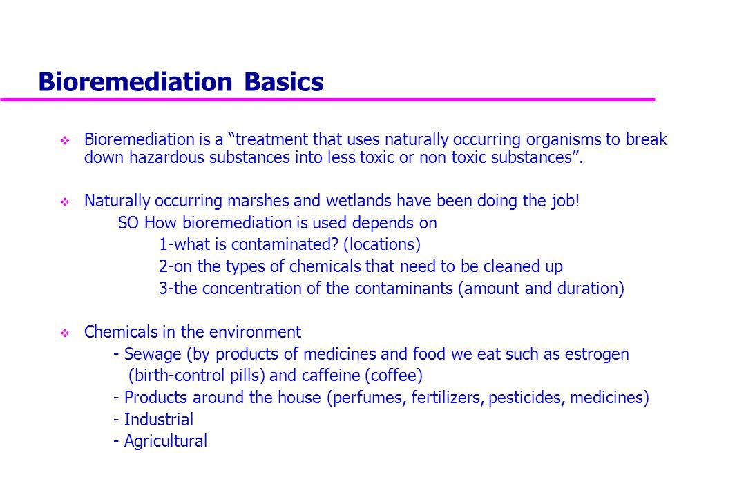 Phytoremediation of pesticides ppt presentation