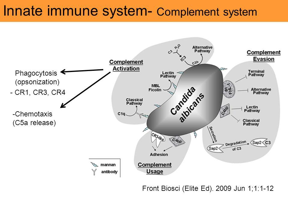acyclovir cream vs ointment