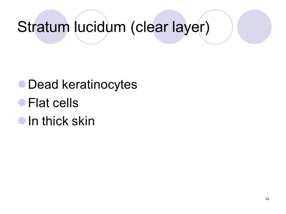 Stratum lucidum (clear layer) Dead keratinocytes Flat cells In thick skin 14